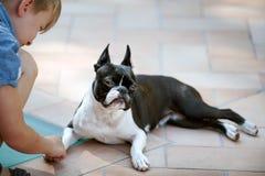 Boston Terrier y muchacho fotografía de archivo libre de regalías