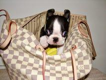Boston-Terrierwelpe in einer Handtasche lizenzfreie stockfotografie
