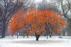 boston vinter Royaltyfria Foton