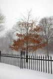 Boston Winter. Stock image of a snowing winter at Boston, Massachusetts, USA Royalty Free Stock Photos