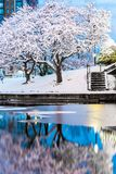 Boston winter wonderland. royalty free stock images