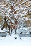 Boston winter wonderland. royalty free stock image