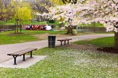 boston wiosna ogrodowa jawna zdjęcia stock