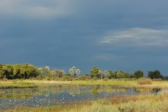 Bostswana landscape with pond and dark blue sky royalty free stock photo