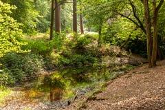 Bosvijver met lage waterspiegel in een weelderig groen de lentebos stock foto's