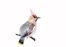 Bosvogelillustratie royalty-vrije stock afbeelding