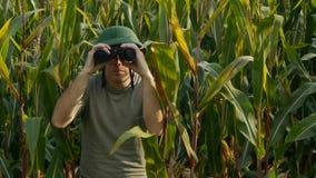 Boswachter met verrekijkers in cornfield stock videobeelden
