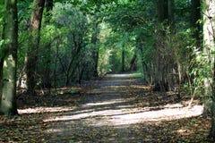 Bosweg amsterdamse bos Stock Afbeeldingen