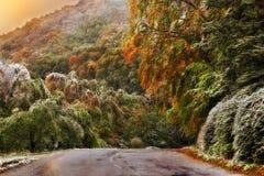 Bosweg in de herfst royalty-vrije stock foto