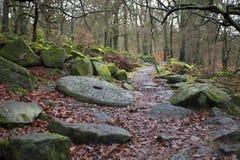 Bosweg in de herfst Stock Afbeelding
