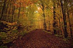 Bosweg in de herfst Royalty-vrije Stock Afbeeldingen