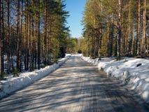 Bosweg in de lente Stock Foto's