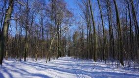 Bosweg in de winter Stock Afbeelding