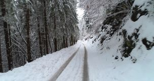 Bosweg in de winter met sneeuw stock videobeelden