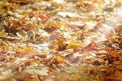 Bosweg die met de herfstbladeren wordt behandeld Stock Foto's