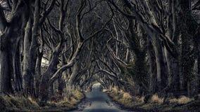 Bosweg donkere hagen Royalty-vrije Stock Foto