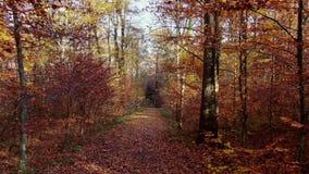 Bosweg door een herfstbos stock videobeelden