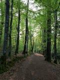 Bosweg Frankrijk stock afbeeldingen