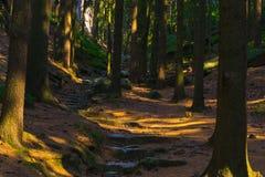 Bosweg in het Natuurreservaat van Prachovské Skà ¡ ly royalty-vrije stock foto