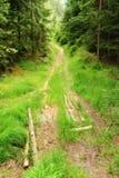Bosweg met gras Stock Foto's