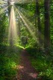 Bosweg met zonneschijn Royalty-vrije Stock Afbeeldingen