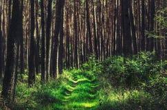 Bosweg in mooi licht stock fotografie