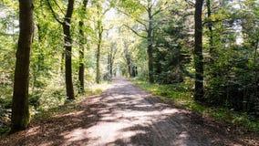 Bosweg op een zonnige september-middag Almelo, Nederland stock afbeeldingen