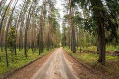 Bosweg in pijnboombos royalty-vrije stock afbeeldingen
