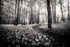 Bosweg tussen bloemen Royalty-vrije Stock Afbeeldingen