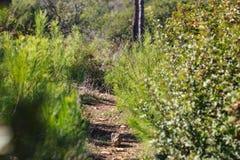 Bosweg tussen groen gras stock foto
