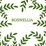 Boswellia in color, border Royalty Free Stock Photo
