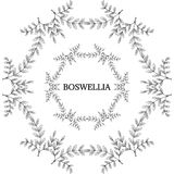 Boswellia in color, LM 16-2. Indian Frankincense Salai or Boswellia serrata vintage illustration. Round frame, decorative border.Olibanum-tree Boswellia sacra Royalty Free Stock Images