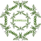 Boswellia in color, LM 16-5. Indian Frankincense Salai or Boswellia serrata vintage illustration. Round frame, decorative border.Olibanum-tree Boswellia sacra Royalty Free Stock Image