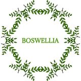 Boswellia in color, LM 16-6. Indian Frankincense Salai or Boswellia serrata vintage illustration. Round frame, decorative border.Olibanum-tree Boswellia sacra Stock Photo
