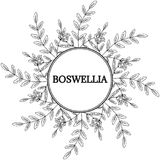 Boswellia, round frame 1. Indian Frankincense Salai or Boswellia serrata vintage illustration.Olibanum-tree Boswellia sacra , aromatic tree. Ink hand drawn Stock Images