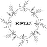 Boswellia, round frame 2 Royalty Free Stock Images