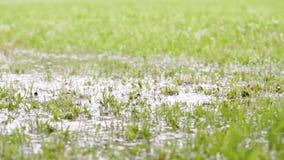 Bosy m??czyzna skacze w wodzie w trawie zbiory wideo