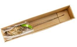 Bosy pepiniera zapas - aronia jagoda Zdjęcie Stock
