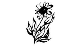 Botánica animada del dibujo de la tinta de la caligrafía libre illustration