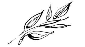 Botánica animada del dibujo de la tinta de la caligrafía ilustración del vector