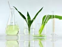 Botánica orgánica natural y cristalería científica, medicina alternativa de la hierba, productos de belleza naturales del cuidado Fotos de archivo libres de regalías