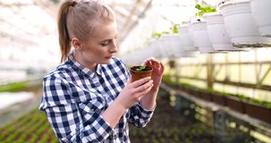 Botánico de sexo femenino joven que examina la planta en conserva almacen de video
