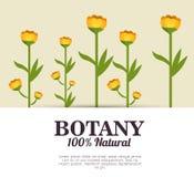 Botânica 100 por cento natural Foto de Stock