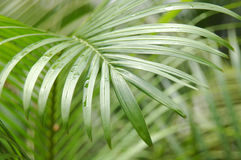 Botânico fotografia de stock royalty free