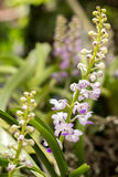 botânico, Botânica, ramalhete, ramo, brilhante, botão, limpo, fim-u Fotografia de Stock