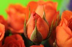 Botão cor-de-rosa da laranja imagem de stock royalty free