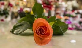 Botão cor-de-rosa da laranja Fotos de Stock Royalty Free