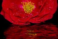 Botão cor-de-rosa vermelho no vidro imagens de stock