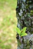 Botão da árvore foto de stock