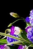 Botão da flor Foto de Stock Royalty Free